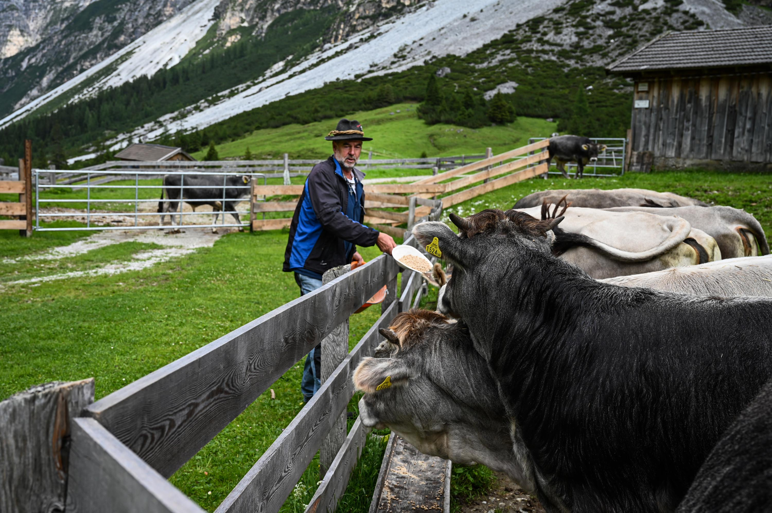 Reinhard Pfurtscheller feeds the cows and calves on his farm in the Austrian Alps. MUST CREDIT: photo for The Washington Post by Lena Mucha.