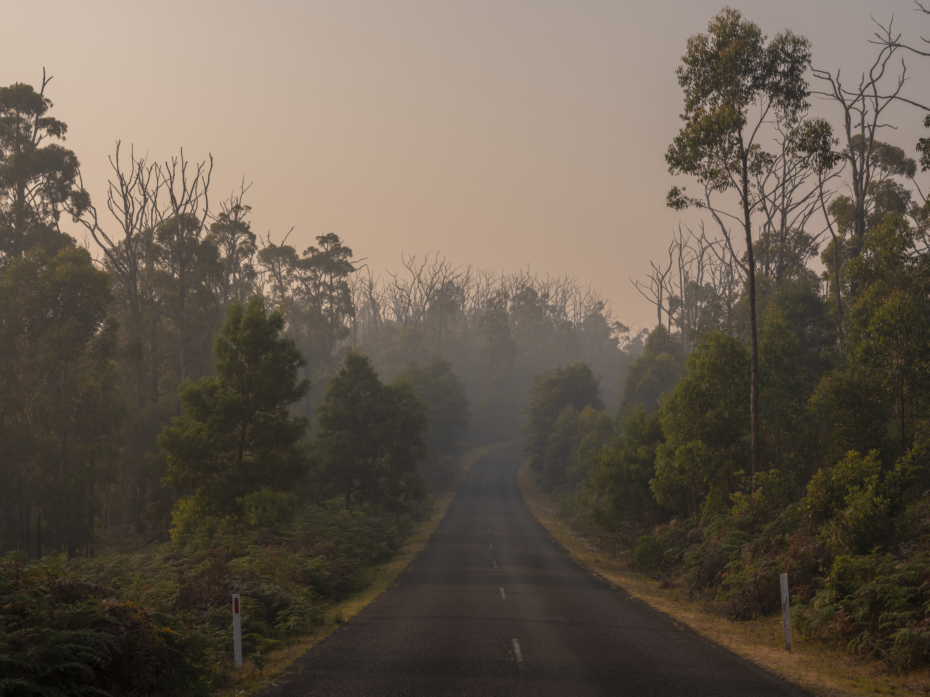 A landscape view in Kinglake National Park shows regenerated forest and dead trees and branches after the Black Saturday bush fires, in Victoria, Australia. MUST CREDIT: photo for The Washington Post by Alana Holmberg/Oculi.