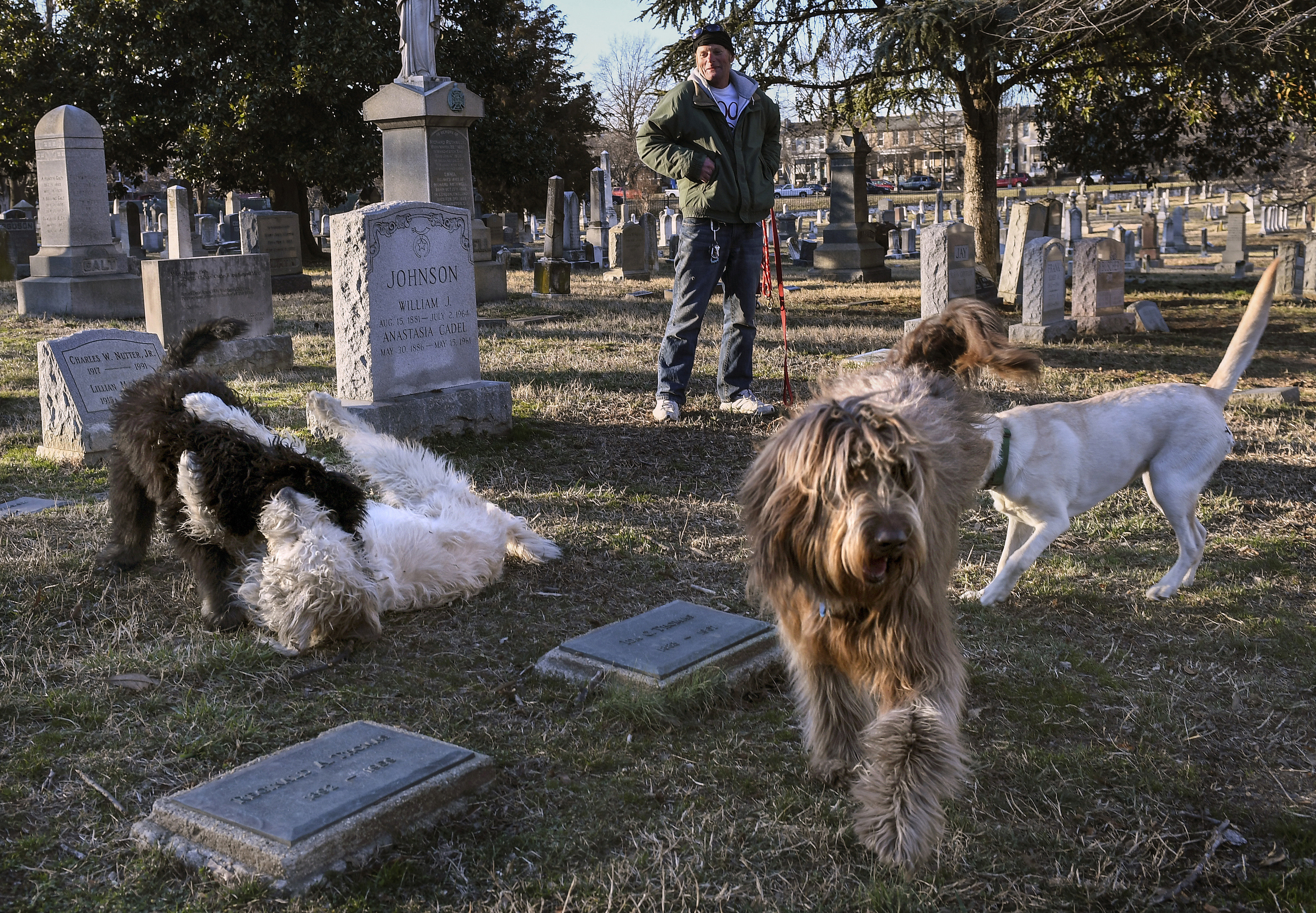 John White, at top, watches as several dogs play together in Congressional Cemetery. White checks the tags on dogs entering the grounds. Must credit: Washington Post photo by Toni L. Sandys