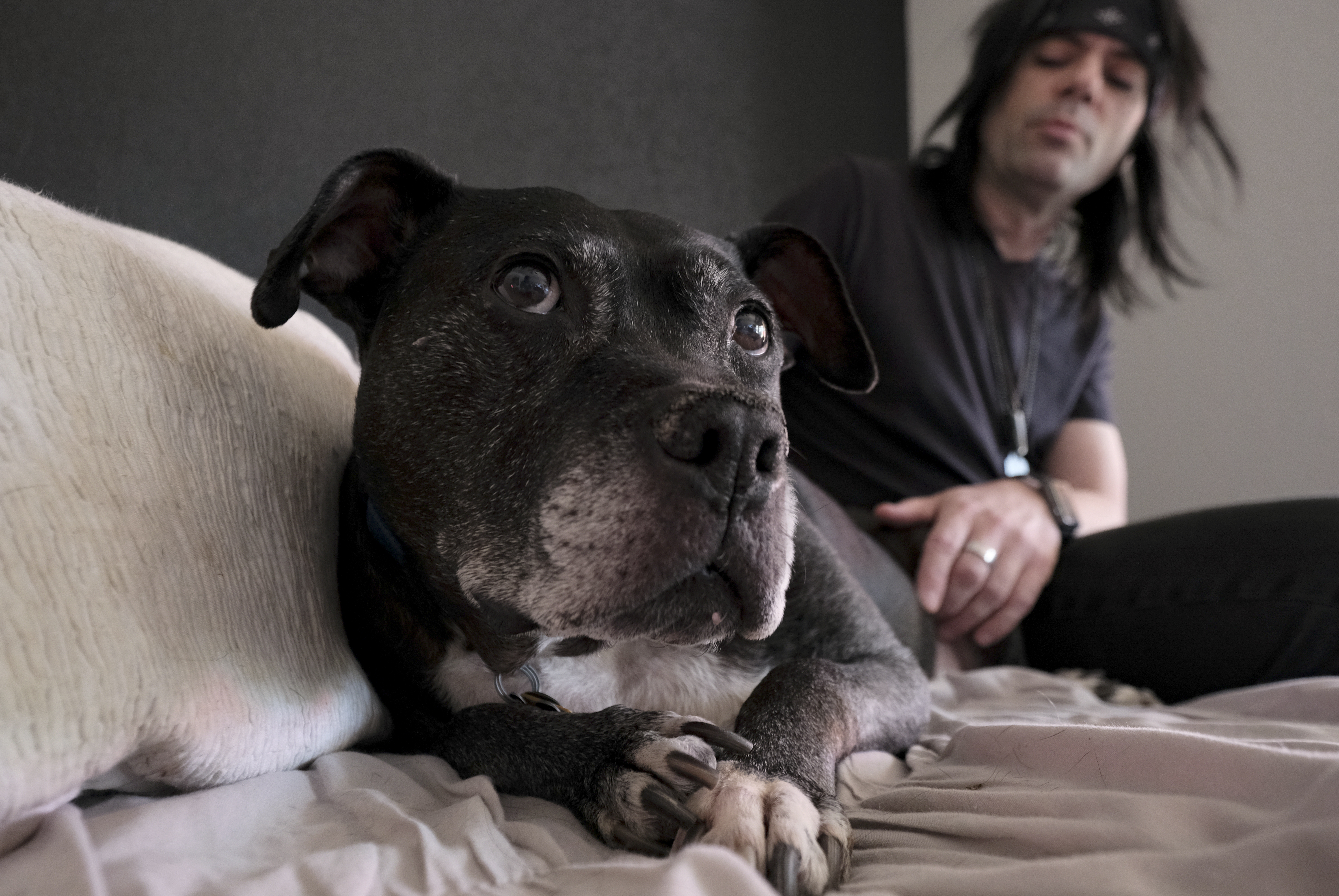 Adopter Richard Hunter said Mel still showed signs of emotional damage 12 years after his rescue from a dogfighting ring. MUST CREDIT: Washington Post photo by Bonnie Jo Mount