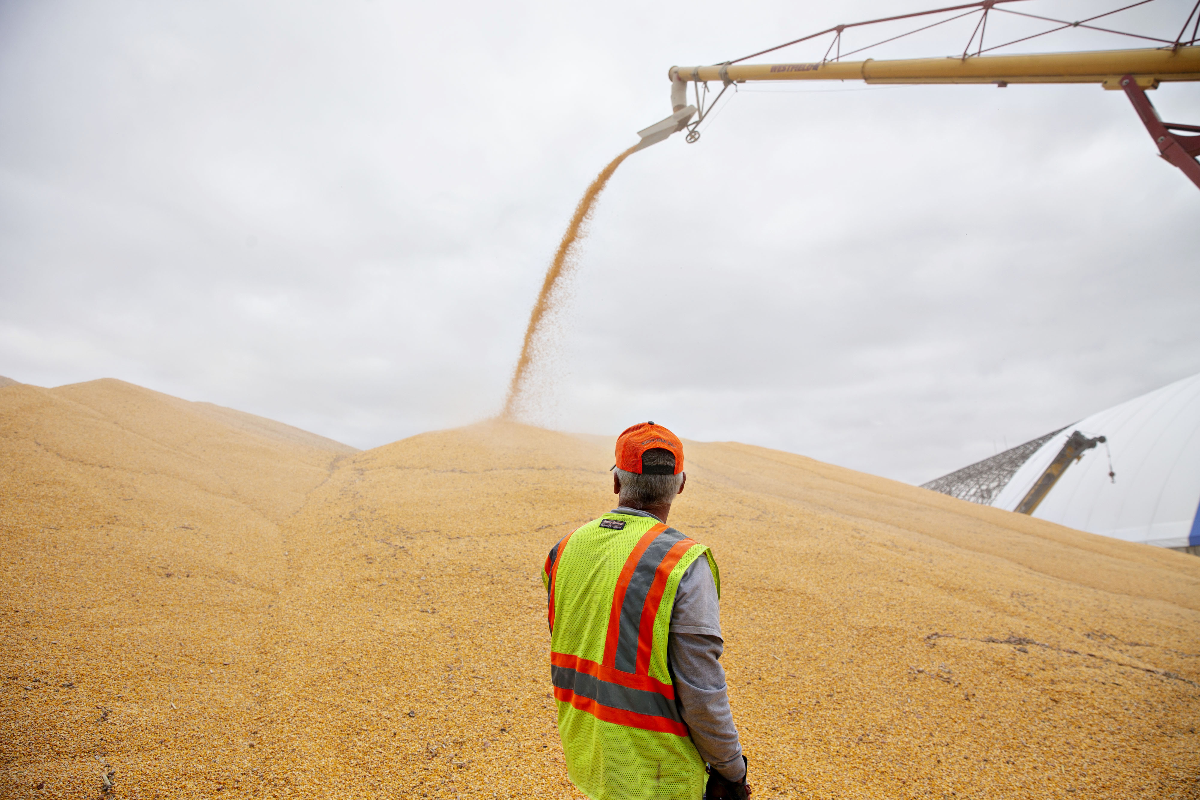 A worker monitors corn being loaded into an outdoor storage bunker at the Michlig Grain elevator in Sheffield, Ill., on Oct. 2, 2018. MUST CREDIT: Bloomberg photo by Daniel Acker.
